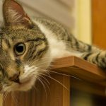 selbstreinigendes Katzenklo Test - Was kann es wirklich?