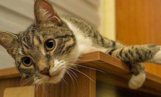 selbstreinigendes Katzenklo Test